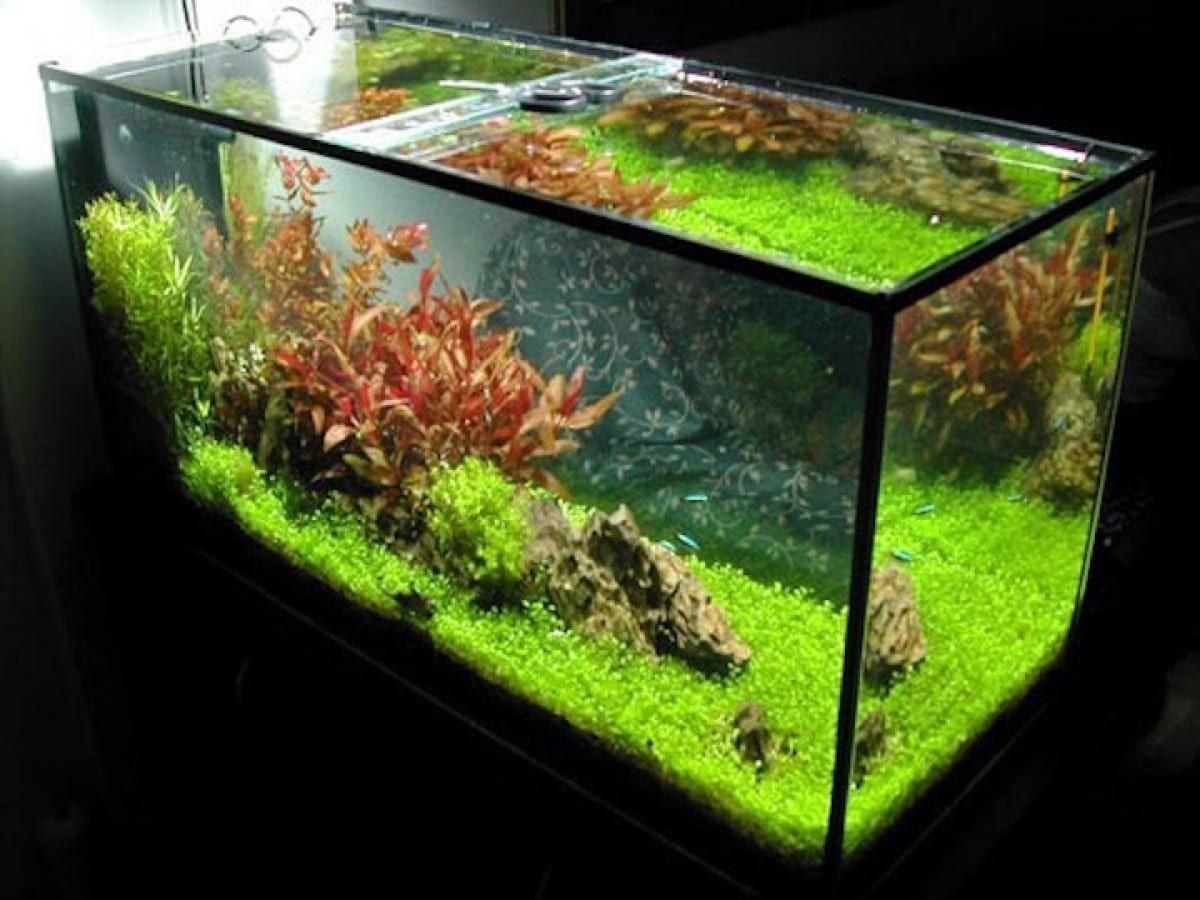 Customized polycarbonate glass aquariums